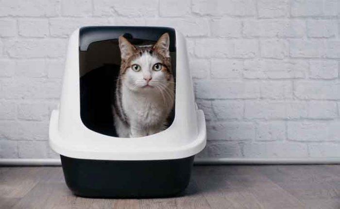 Choosing Cat Litter