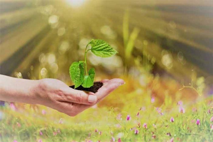 This Environmental Organization Earns its Great Reputation