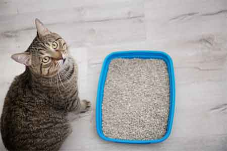 Traditional Clay Cat Litter
