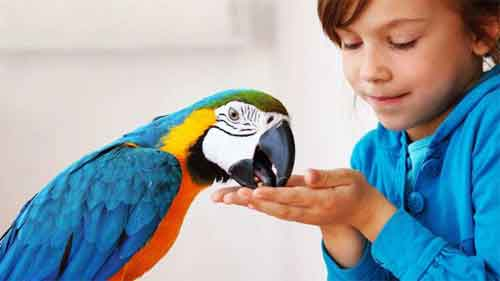 Birds Can Be Great Pets, but Are They Right for You