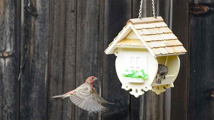 Types of Bird Houses and the Birds They House